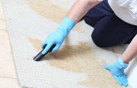 Carpet cleaning West End WC1